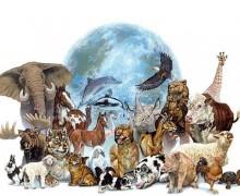 40ans avec ses animaux