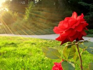 soleil-rose
