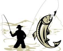 Anguille et aiguille