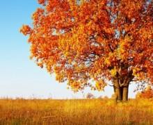 Naissance d'automne